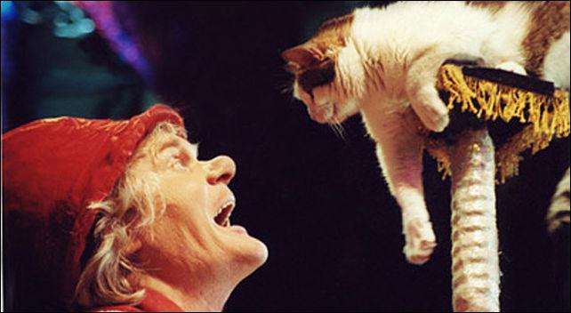 Мэрия Ашкелона просит помощи уКадырова всоздании приюта для кошек