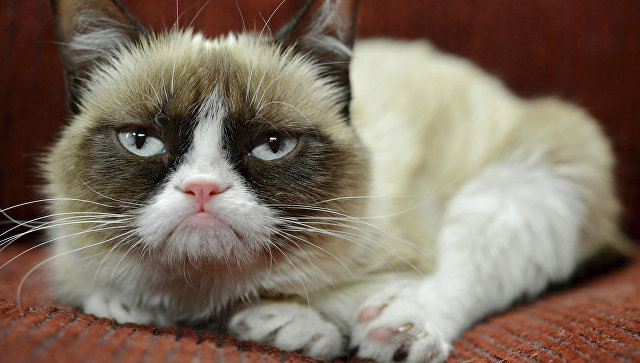 Мем «Сердитый кот» приобщился кпрекрасному на известном бродвейском мюзикле