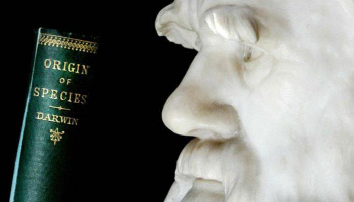 Турецких школьников больше небудут обучать  теории Дарвина