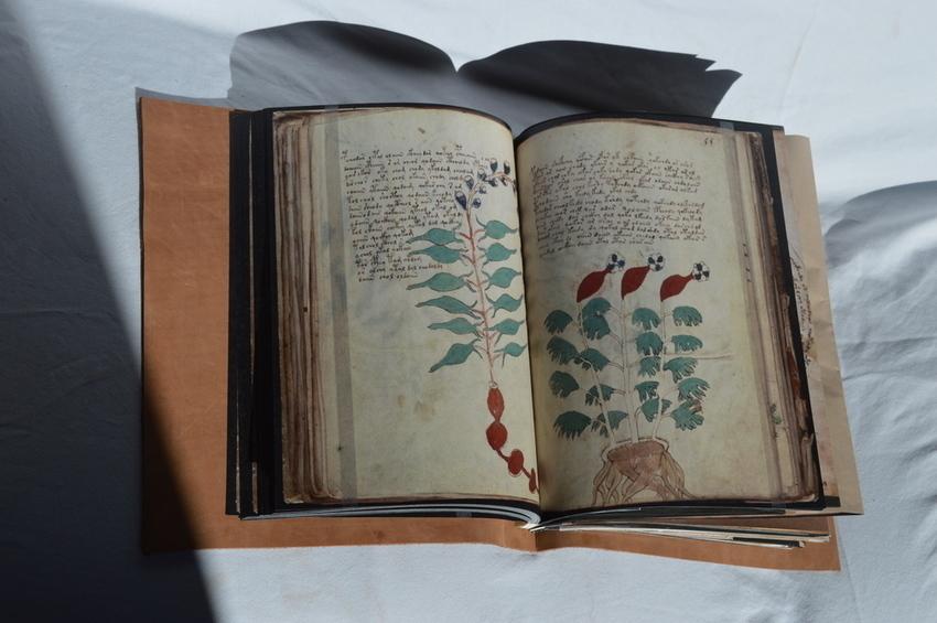 Испанское издательство выпустит манускрипт Войнича