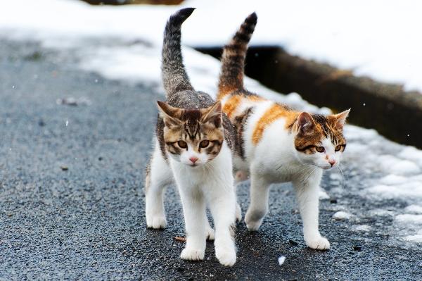 ВЯпонии бездомную кошку подозревали  вубийстве пенсионерки