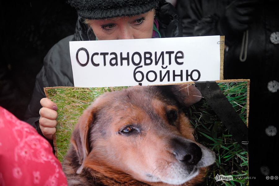 СБОР ПОДПИСЕЙ В ОТВЕТ ДОГХАНТЕРАМ!  PnqDWgx