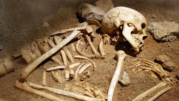 выдаче академической останки скелета 12 метров них является дверной