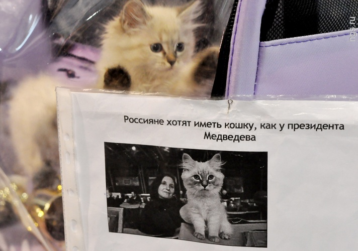 кот медведева дорофей фото